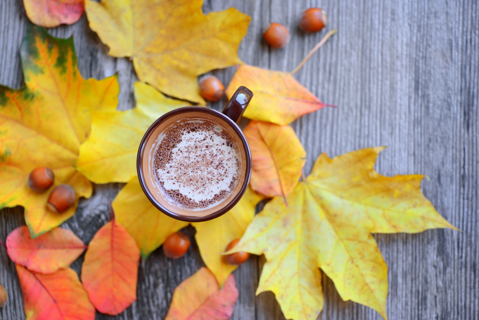 Autumn Cup of coffee, nuts, chocolate and autumn leaves. Autumn